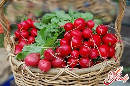 technology of growing radishes