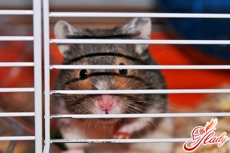 hamsters care for them