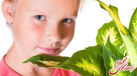 домашні отруйні рослини