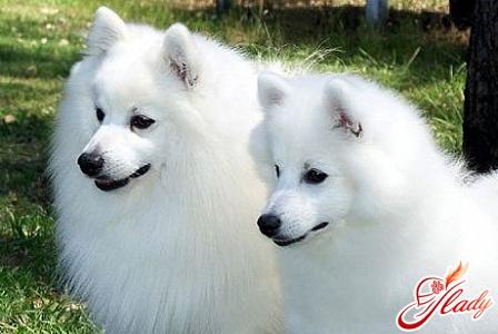 dog spanish